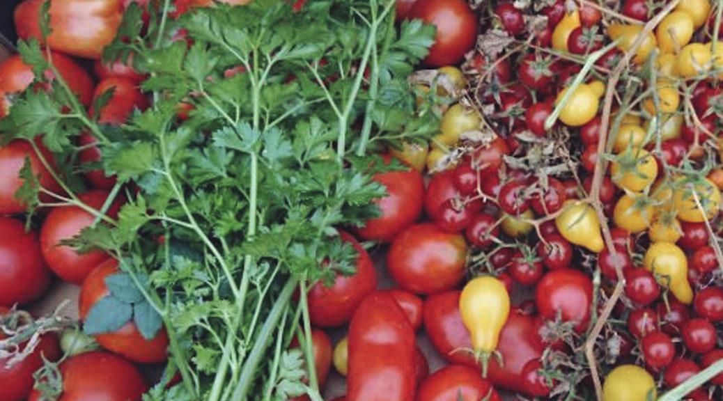 You-say-tomato-I-say-pomodoro
