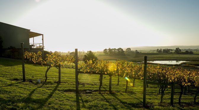 Traralgon Vineyard