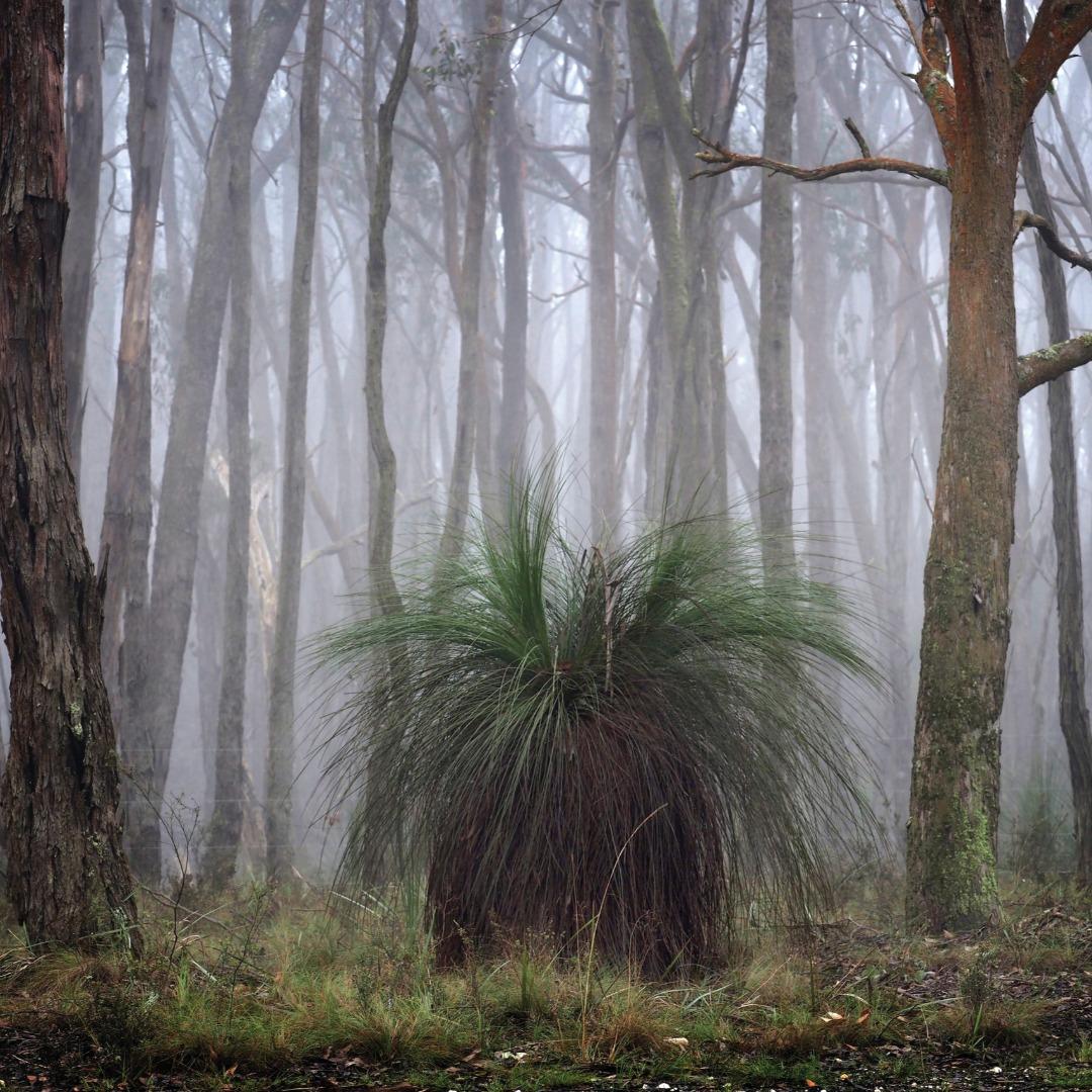 Victorian Parks & Reserves