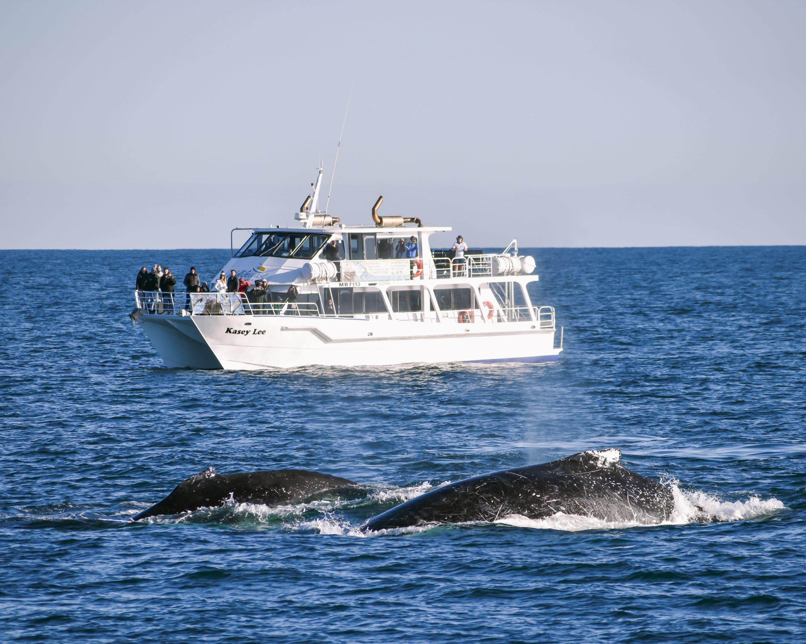 Island Whale Festival Phillip Island